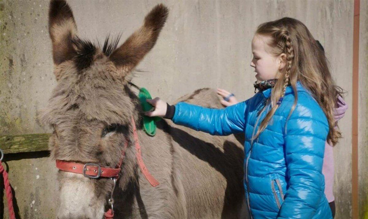 image.dim.480.rb-scc-bus-photo-donkey